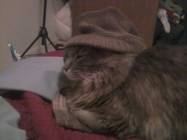 cat in hat