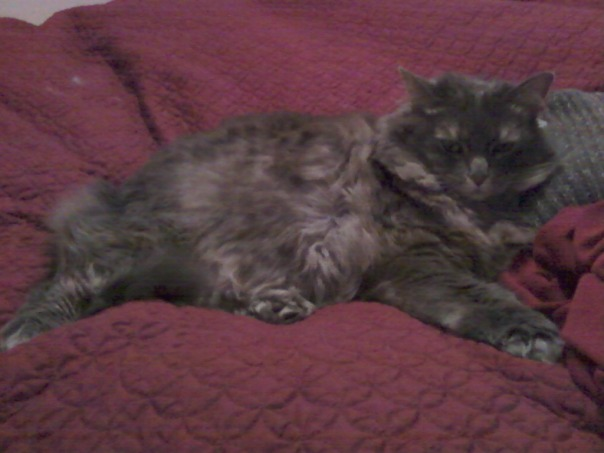 resting kitty 2