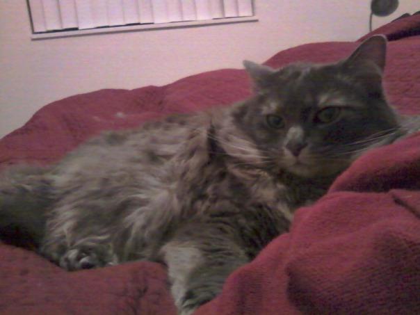 resting kitty 3
