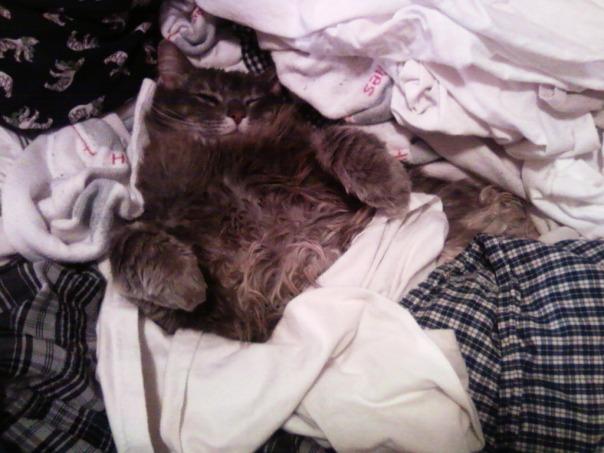 laundry cat 1