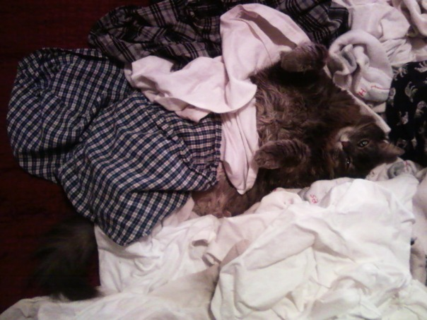 laundry cat 2