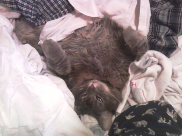 laundry cat 3