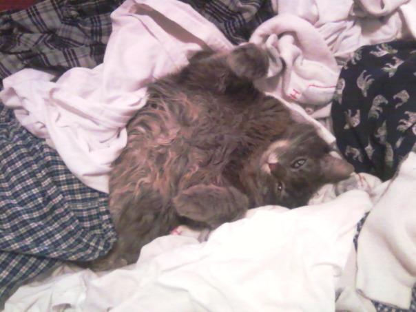 laundry cat 5