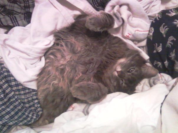 laundry cat 7