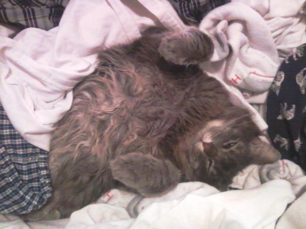 laundry cat 8