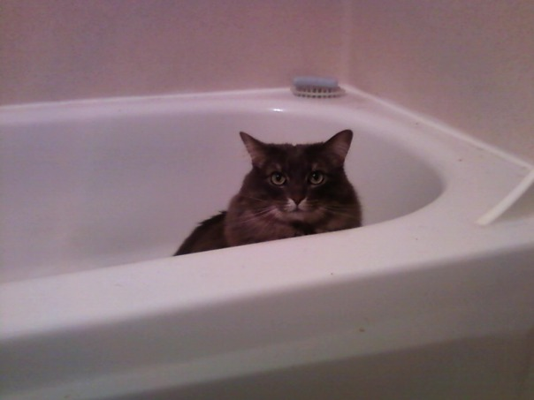 tub kitty 1