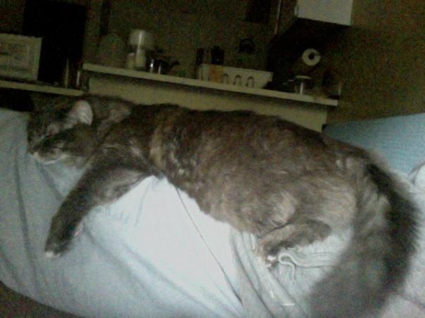lazy kitty 4