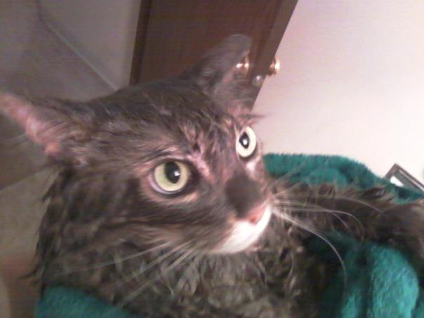 wet cat 5