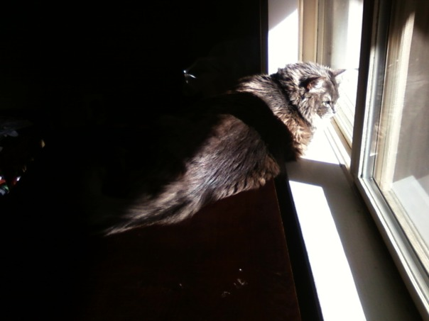 cat in the sun 1