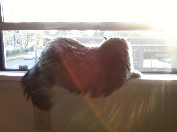 cat in a sunny windowsill 1