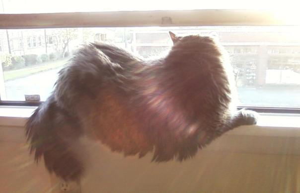 cat in a sunny windowsill 2